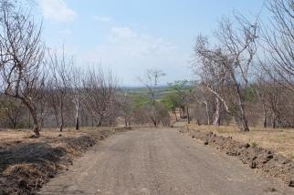 Palo Santo forest
